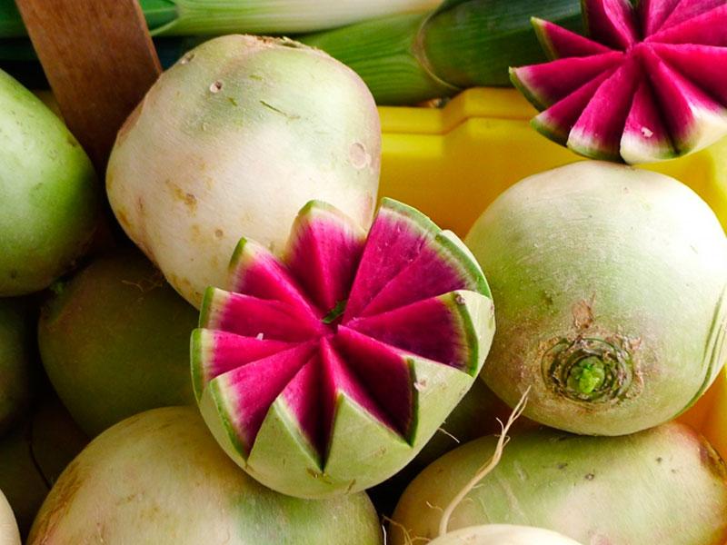 Rábano sandía, una colorida hortaliza - Pasión & Carácter